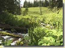 East Marvine Creek headwaters